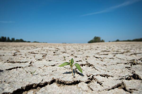 """Les sols sont """"très secs"""" en Auvergne-Rhône-Alpes, constate Météo France."""