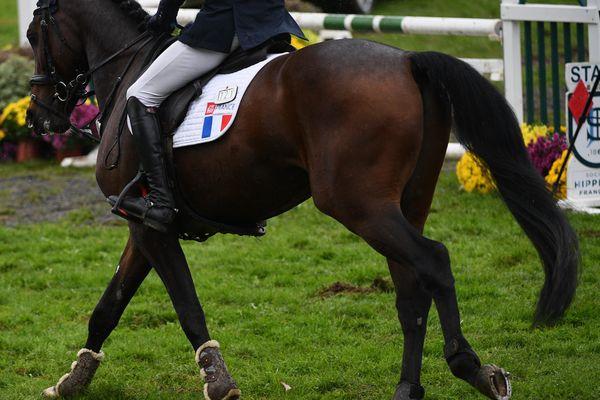 Le cheval a été euthanasié lors du concours au Lion d'Angers le 14 juillet 2020.