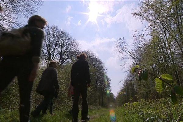 Sorties nature dans les espaces naturels des Hauts-de-France