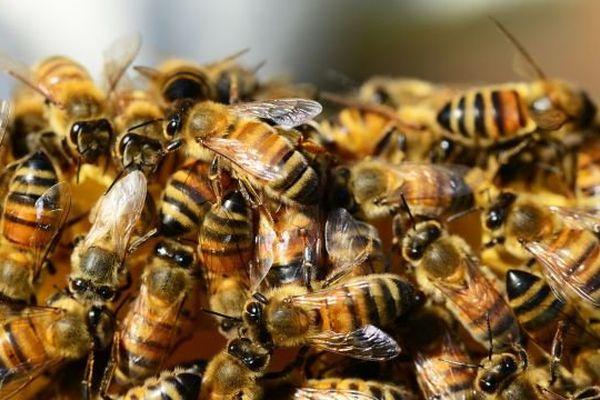 Les abeilles sont en dehors des ruches alors qu'elles devraient être en hivernage