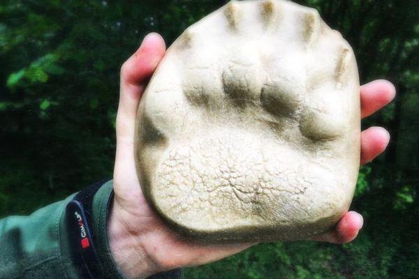En Ariège, une randonnée sur les traces de l'ours avec un guide spécialisé.