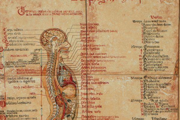 Les écrits de Hildegarde de Bingen sont étudiés dans le monde entier.