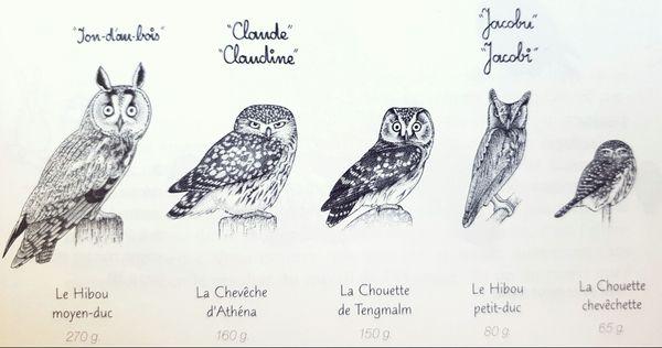 Dans la Hulotte, Pierre Déom s'efforce de mettre en valeur la diversité des espèces animales.