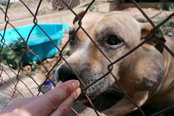 La chienne Enjoy est atteinte d'une tumeur jugée inopérable.