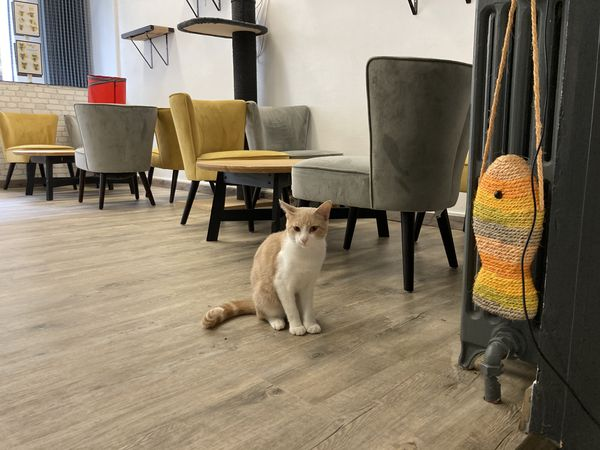Entre 10 et 15 chats vivent au milieu des clients.