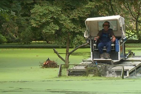 Un bateau-nettoyeur va enlever pendant plusieurs semaines les lentilles d'eau qui recouvrent la surface de l'eau des douves de la citadelle Vauban, à Lille.