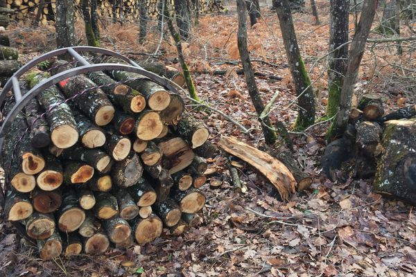 La filière bois naturellement source d'énergie renouvelable majeure en Dordogne