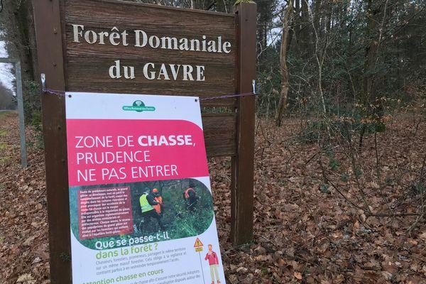 En forêt domaniale du Gâvre, mars 2021