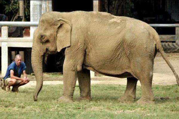 Tony Verhulst a travaillé plus de 20 ans auprès des éléphants.