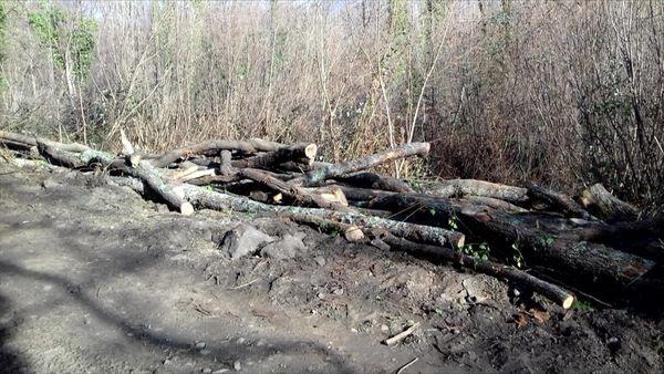 Des centaines d'arbres avaient été coupés puis stockés avant d'être volés.