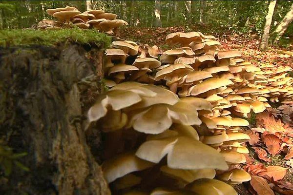 La forêt de Bercé, un espace naturel à découvrir pour mieux le protéger.