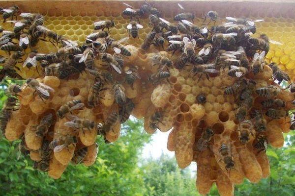 L'abeille Drômoise et Ardéchoise réclame plus de transparence sur la mortalité des abeilles