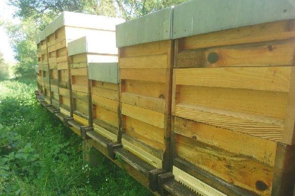 Hausses et rehausses dans les ruchers où l'activité a très bien démarré