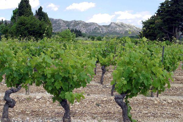 Le quai d'Orsay espère attirer les touristes dans les allées des vignobles provençaux.