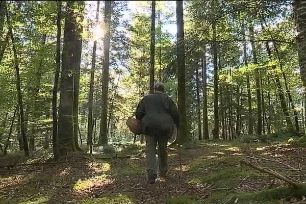 Les cueilleurs rentrent pour l'instant bredouilles dans les sous-bois de Corrèze