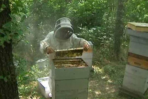 La pluie et les intempéries qui ne cessent depuis la fin de l'hiver empêchent les abeilles de butiner correctement et de polliniser avec pour conséquence une diminution de la production et des colonies.