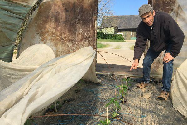 Les poivrons sont plantés ils devraient arriver après la période de confinement si elle ne dure pas longtemps espère Daniel Plantive