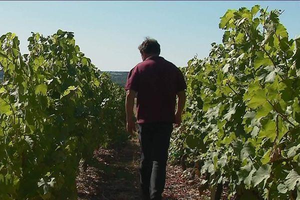 Les viticulteurs de Jasnières craignent la réaction américaine à la taxe GAFa;