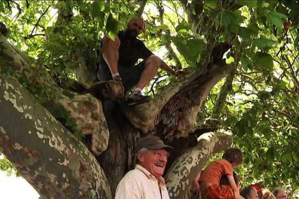Des arboristes-grimpeurs au secours du collectif Gien Sauvons les platanes