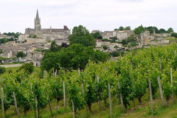 Saint-Emilion et ses vignes