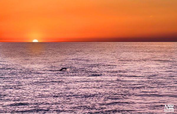L'exploit sportif visait aussi à sensibiliser sur la beauté de la mer et le risque de la polluer.