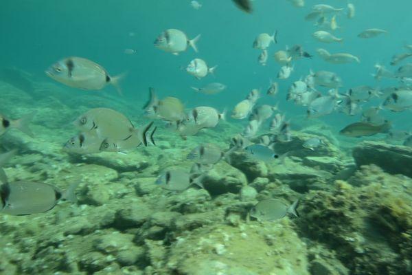 Installé au départ de la plage de Peyrefite, ce sentier vous permet de découvrir la richesse des eaux méditerranéennes.