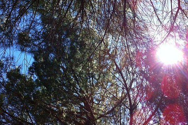 A l'ombre des pins en Languedoc-Roussillon