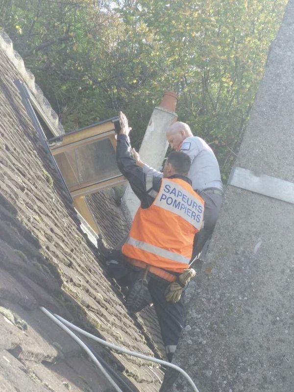 Un sanglier coincé sur le toit d'une maison à Seignelay dans l'Yonne, les pompiers et l'ONF interviennent - 1er novembre 2017