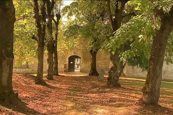 Des mûriers pour nourrir les vers à soie dans le parc du château de Gageac