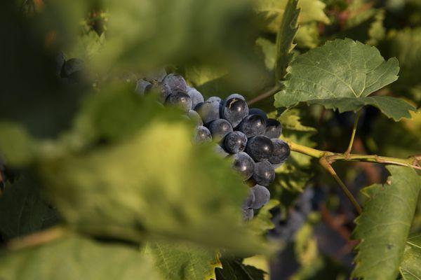 Les vignerons d'Occitanie se disent soulagés après la suspension pour cinq ans de la taxe Trump - 15 juin 2021