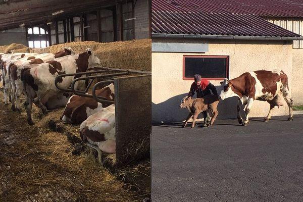 Alors même si Bruno et Christian font de la vente à la ferme en lentilles, lait et viande (en quantité limitée ) ils craignent économiquement les conséquences de cette crise sanitaire...
