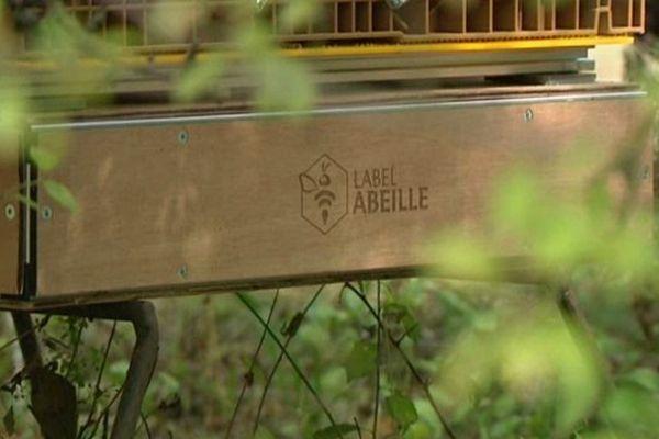 Label Abeilles, le boitier connecté pour lutter contre la disparition des abeilles mis au point par le jeune entrepreneur orléanais Bertrand Laurentin
