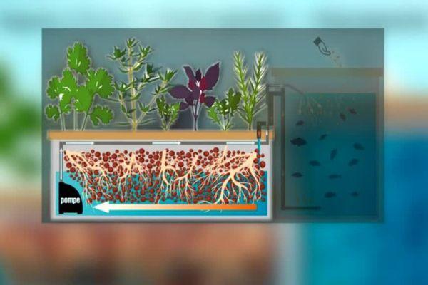 Le schéma de ferme aquaponique