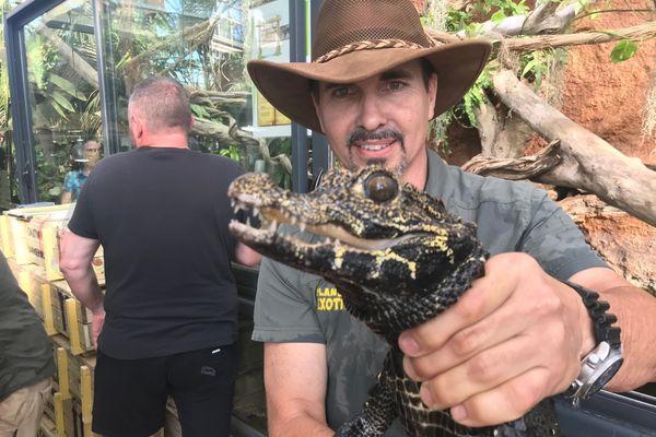 Les soignants de ce parc animalier spécialisé dans les reptiles préparent les crocodiles pour un voyage de 40 heures vers le Maroc.