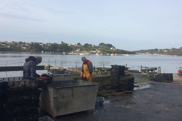 Les huîtres de la production d'Yvon Madec, à Lannilis dans l'Aber Benoît.