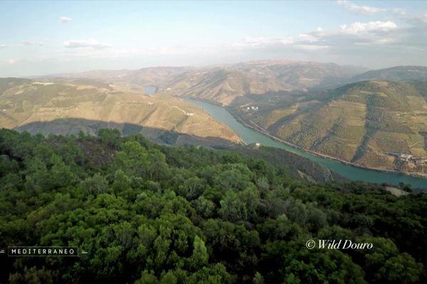 La vallée du Douro au Portugal.