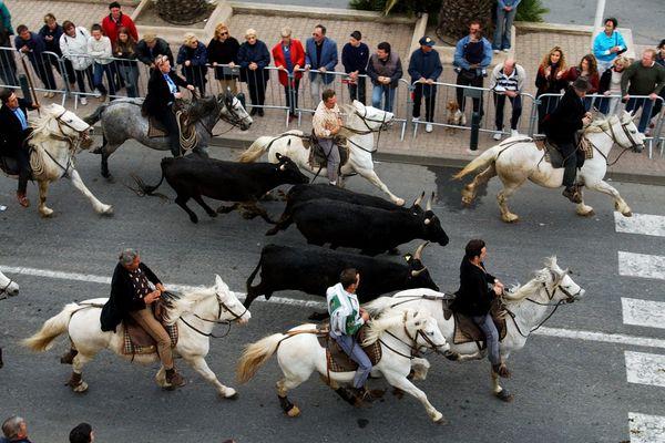 Pas de chevaux dans les rue de Palavas-les-flots cette année pour la féria de la mer, faute de maire.