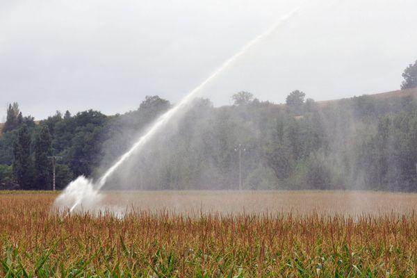 Le maïs peinent à pousser avec la sécheresse
