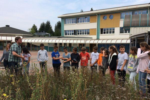 Cours de SVT autour de la mare et du jardin mellifère au collège du Thillot