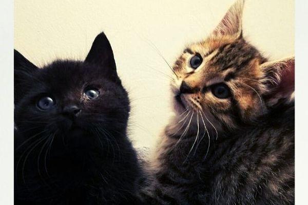 Ella et Nora sont soeurs et ne seront pas séparées.