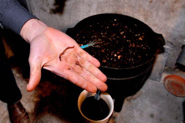 Un lombricomposteur avec ses lombrics qui accélèrent la décomposition des déchets et permettent ainsi de composter de façon individuelle