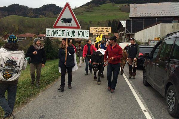 Les manifestants protestent avec le troupeau.