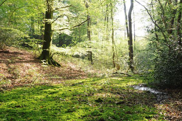 La forêt de Desvres