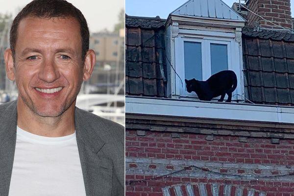 """Dany Boon et le """"très gros chat"""" d'Armentières; sa ville natale"""