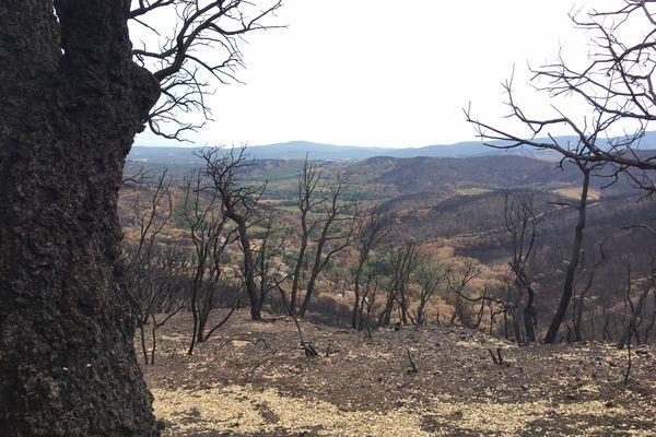 La petite communauté avait une vue plongeante sur la plaine de Grimaud en contrebas. Un paradis devenu enfer suite à l'incendie.