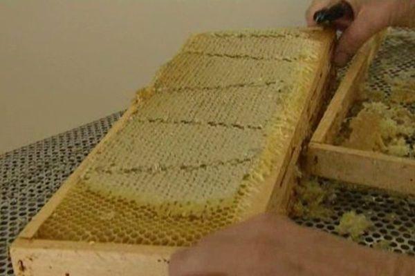 L'apiculture est indispensable à la biodiversité du département. Agribio espère favoriser le passage de l'activité au bio grâce à une campagne de financement participatif.