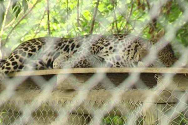 Un des 400 animaux du Zoo du Bouy