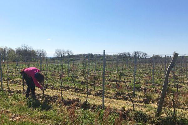 Gaëlle est sans main-d'oeuvre pour s'occuper de ses 20 hectares de vigne