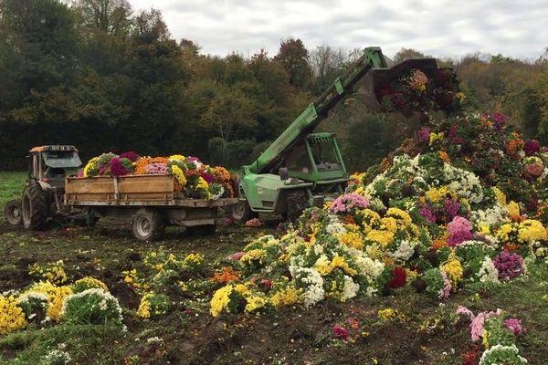 De nombreux horticulteurs sont contraints de détruire une grande partie de leur production.