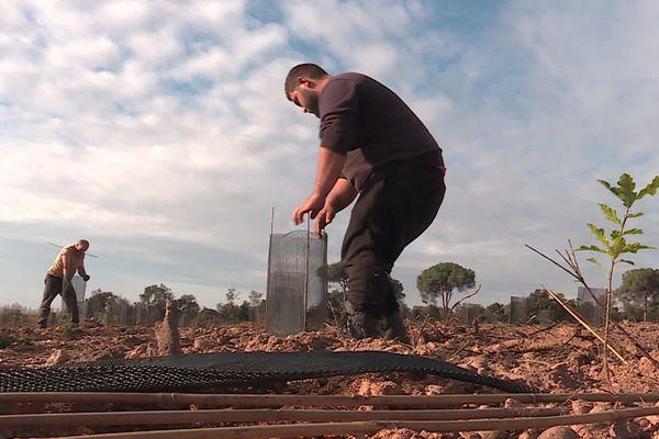 Le reboisement a commencé à Générac suite aux ravages causés par de terribles incendies en 2019